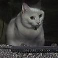 水槽のネコ